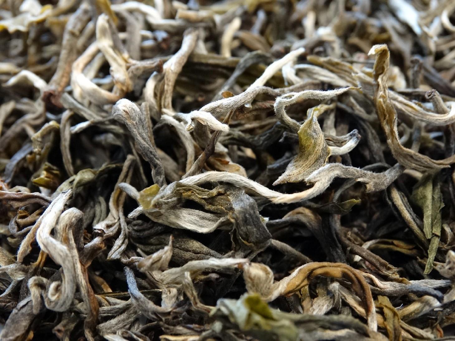 Thé blanc white cui min sélectionné par Tea & cie maison de thé à Vannes golfe du morbihan