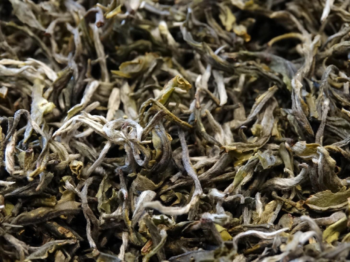 China White tea, Yunnan Province
